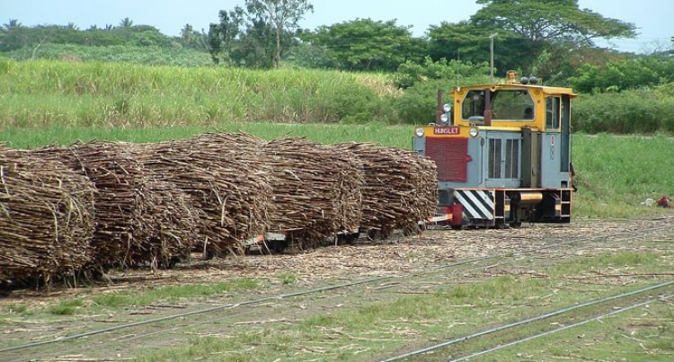 Our Core Business Promoting Cane Production : Clark