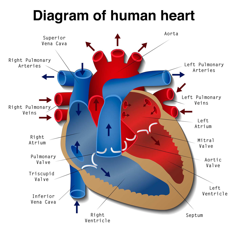 Cardiovascular Disease | Fiji Sun