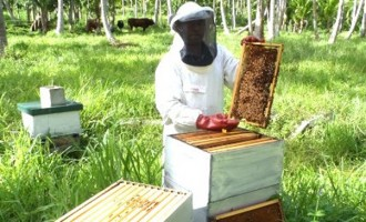 Beekeepers Told, Invest From Own Pocket