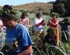 Islanders Cut Cane To Fund Church Building