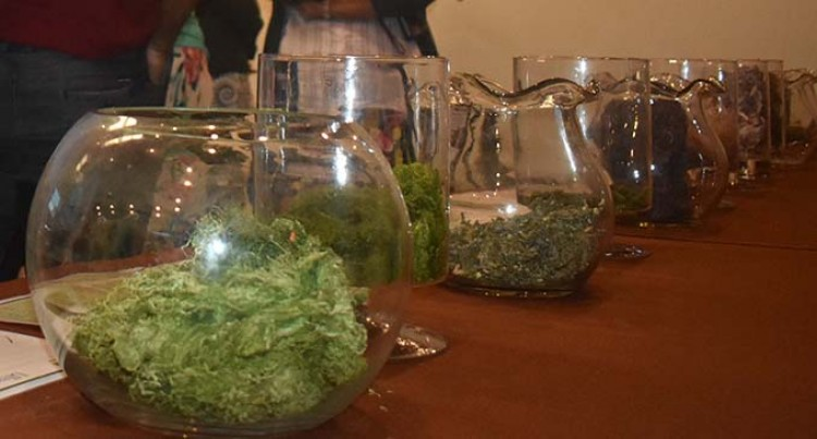 Need for Seaweed industry to standardise: expert