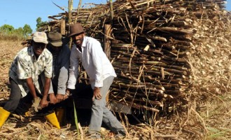 EDITORIAL: Dirty Politics Blamed For Problems In Sugar industry