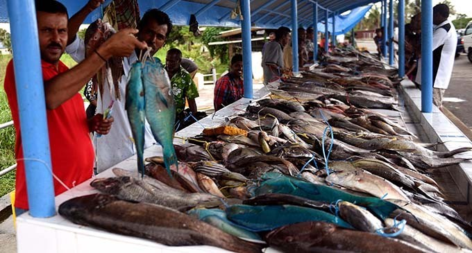 Fisheries-Koroilavesau: Ministry Will Consider WWF-Pacific Concerns