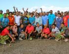 Civil Servants Plant Mangroves Along Foreshore In Labasa