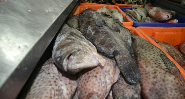 Ban On Export, Sale Of Endangered Fish During Breeding Season