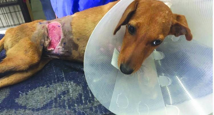 Animal Cruelty: Cane-knife Wielding Lunatics Terrorise Local Animals