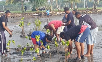 EDITORIAL: Replanting Mangroves Vital To Protecting Coastline And Fisheries Resources