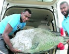 Raid :Fisheries Officers Seize Beche-de-mer, Fish