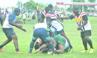 Big Bula Lions Triumph