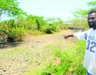 Drought Affects Livestock, Water Sources Drying Up