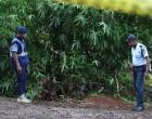 Market Vendor Found Dead Near Driveway