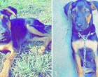Family To Offer Reward For Missing Pet Dog