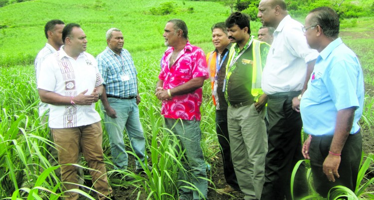 SUGAR: Government Grants Lifts Cane Planting
