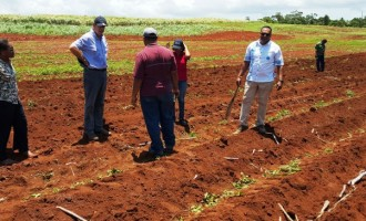 Growers Council Extends Cane Replanting Season