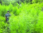 Vanua has Role to Play in War on Drugs