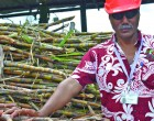 New Mill Manager  For Labasa  Sugar Mill