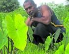 Dream Comes True For Navua Farmer