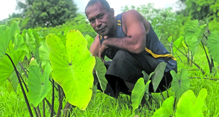 Dream Comes True For Navua Farmer