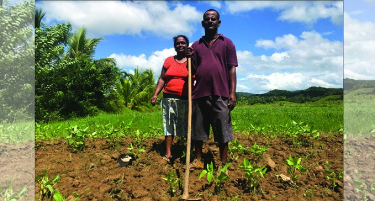 Grant Helps Labasa Farmer Grow Income