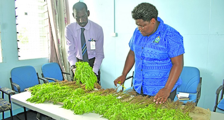 SSP Nakauyaca Sends Warning To Those Cultivating Marijuana