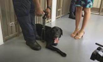 Opening Of The Fiji Dog Detector Unit Suva Complex