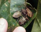 Dead Insects Found On Japanese Car Ship