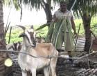 Farm Life Keeps Ajinesh and Family Happy