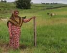 Grant Helps Bano Thrive as Livestock Farmer