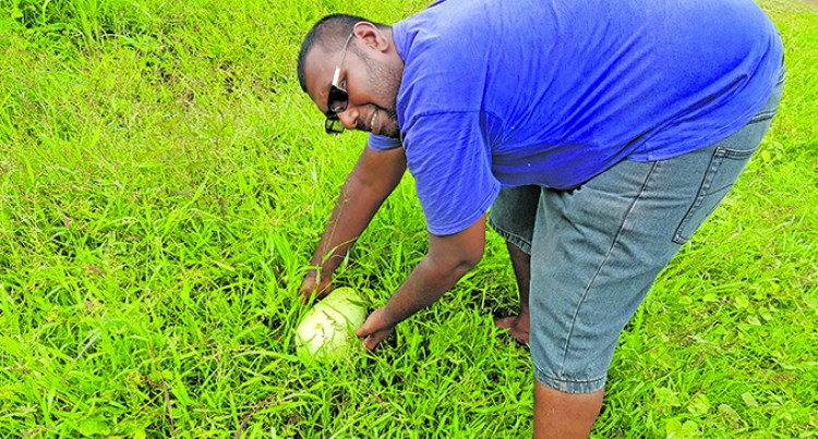 Planting Better, Cane Farmers Say