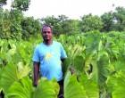 Taveuni farmer sets the trend