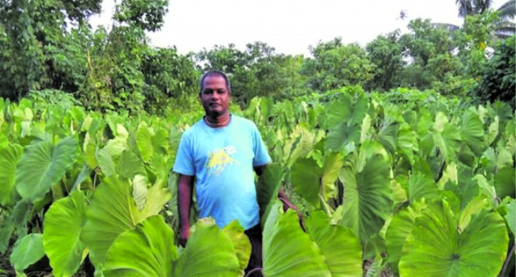 Taveuni farmer sets the trend