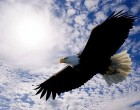 Become the 'EAGLE'