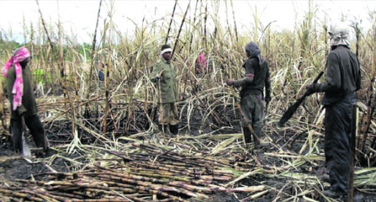 No Need For Police Reports On Burnt Cane: FSC
