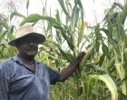 Singh Moves Back Here To Farm Land