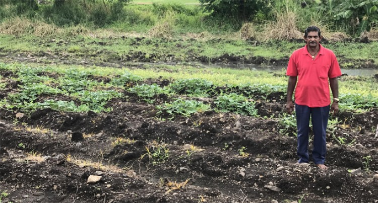 Tavua Farmer Acknowledges Government's Help