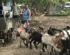 Lata's love for animal farming grows her business