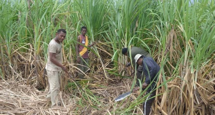 PM Reminds Cane Farmers Of Opponents' 'Doomsday Prediction'