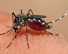 1024 Dengue Cases Record Between  January 1 And February 23, 2018: Akbar