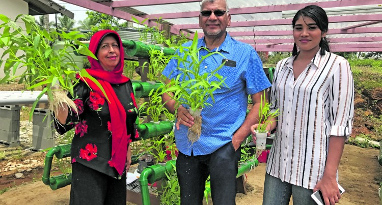 Makoi Women Try Hydroponics Method