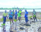 Mangrove Planting Ends Special Day
