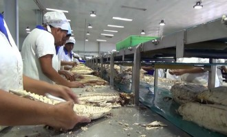 Consistent, Sufficient Supply Of Tuna Remains A Challenge