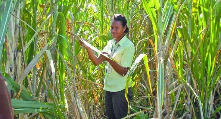Meet Seniwaiti Ratu, FSC's First  Female Field Co-ordinator