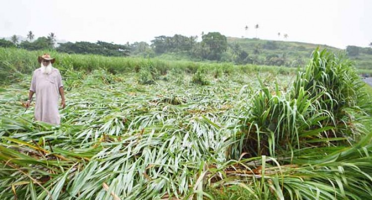 Recent Floods to Affect Cane