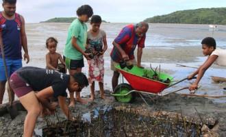 2000 Mangrove Seedlings Planted