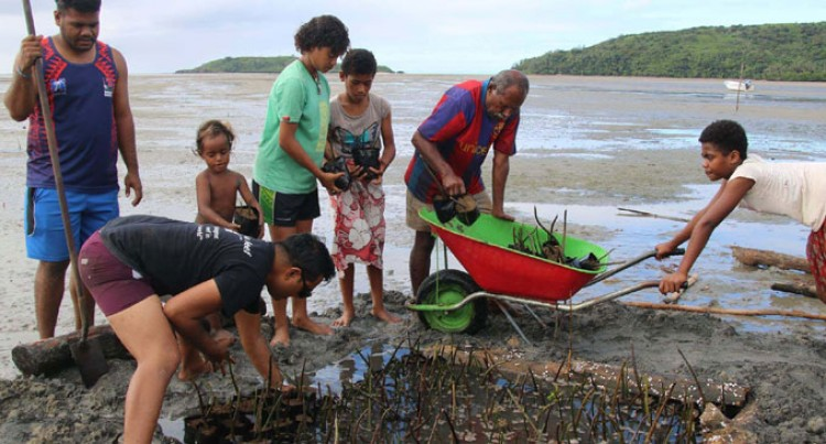 2000 Mangrove Seedlings Planted