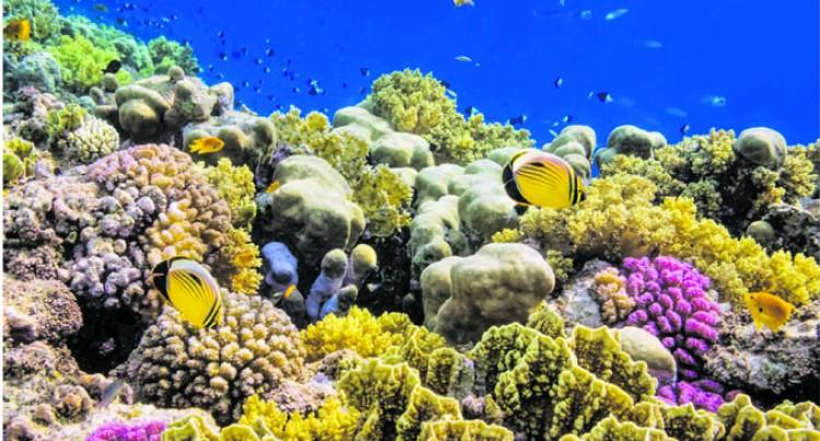 Reef Explorer Offering Climate Change, Marine Volunteer Opportunities