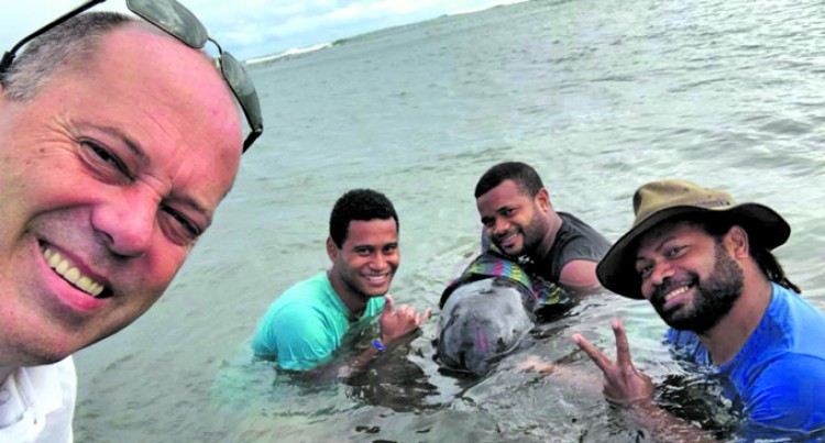 People Respond And Help to Save Baby Whale Beached in Sigatoka