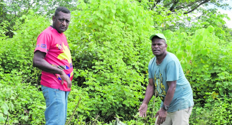 The Ambitious Farmer of Navosa
