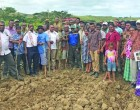 Cane Production Returns To Yalavu After 10 Years