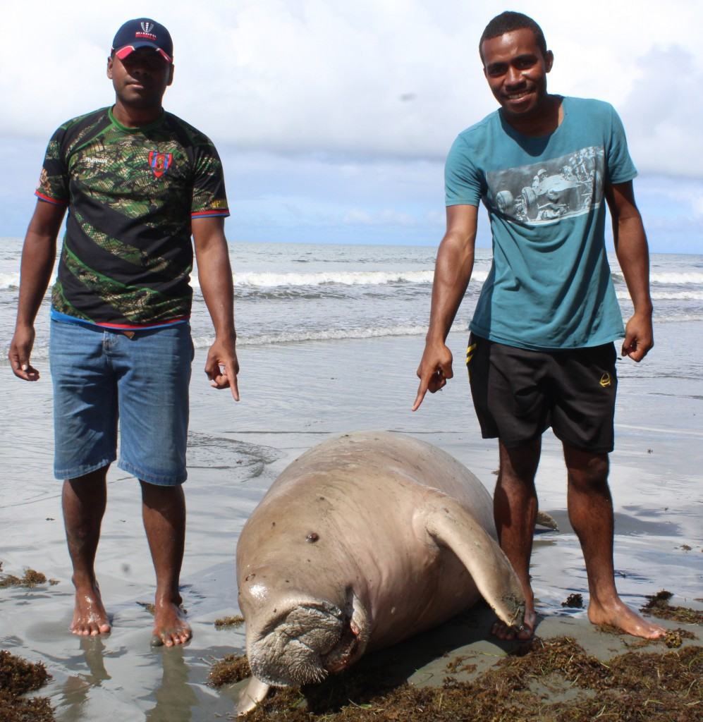From left Malelei Veidreyaki and Vilikesa Karalo with the dead Dugong at Kiuva Beach Tailevu on May 20,2018.Photo:Simione Haravanua.